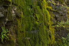 在岩石墙壁-储蓄照片上的绿色青苔 免版税库存图片