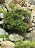 在岩石小山的树 库存图片