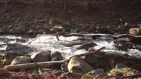 在岩石小河床下的怀特沃特旅行 股票视频
