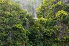 在岩石峭壁的雨林 免版税库存照片