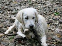 在岩石床上的湿小狗 免版税图库摄影