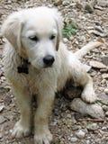 在岩石床上的湿小狗 库存照片