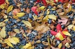 在岩石床上的秋天叶子 库存照片