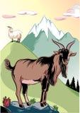 在岩石栖息的山羊男性 免版税库存照片