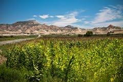 在岩石沙漠的全景五颜六色的看法有玉米的绿色领域的在蓝天和云彩的作为背景 免版税图库摄影
