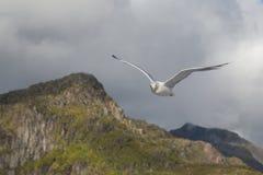 在岩石海岸的一次鸥飞行 库存照片