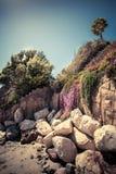 在岩石海岸的偏僻的棕榈树 免版税库存照片