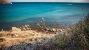 在岩石海岸的小红色鸦片与蓝色海 免版税库存图片