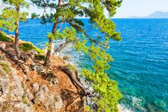 在岩石海岸的杉木在凯梅尔,土耳其附近 免版税库存图片