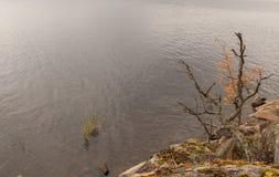 在岩石海岸的秋天结构树 库存图片