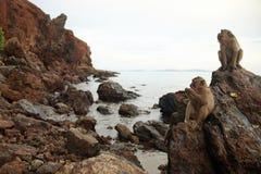 在岩石海岸的猴子 免版税库存图片