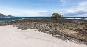 在岩石海滩的结构树 免版税图库摄影
