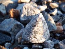 在岩石海滩的壳 免版税图库摄影