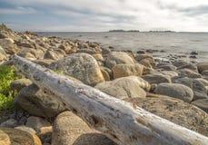 在岩石海滨的漂流木头 免版税库存图片