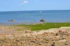 在岩石海滩的鳕鱼角 库存图片