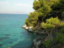 在岩石爱琴海海岸,希腊的杉树 免版税库存图片