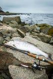 在岩石瑞典海岸的海鳟渔 库存照片