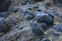 在岩石的一个臭虫 免版税图库摄影