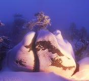 在岩石的一棵孤立杉树 免版税库存照片