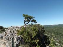 在岩石的一棵弯,偏僻的树 免版税图库摄影