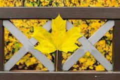 在岩石的一片美丽的黄色秋天叶子 免版税库存图片
