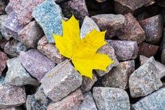 在岩石的一片美丽的黄色秋天叶子 免版税图库摄影
