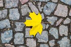 在岩石的一片美丽的黄色秋天叶子 库存图片