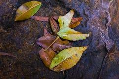 在岩石的下落的叶子 免版税库存图片