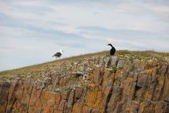 在岩石的两只鸟 免版税库存照片