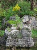 在岩石的两只鸭子 免版税图库摄影