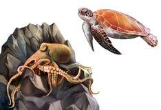 在岩石的乌龟和章鱼。 库存照片