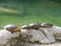 在岩石的乌龟 免版税库存图片
