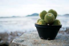 在岩石的仙人掌有海滩背景 免版税库存照片