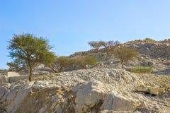 在岩石的低传播的树在一个热的国家,在沙漠 免版税库存图片