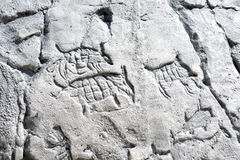 在岩石的原始艺术品 免版税图库摄影