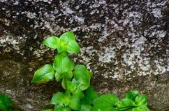 在岩石的叶子在瀑布在近距离的森林里 免版税库存图片