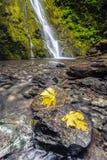 在岩石的叶子在麦迪逊秋天 免版税库存图片
