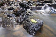 在岩石的叶子 库存图片