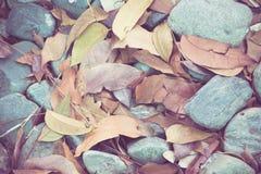 在岩石的叶子 免版税库存图片
