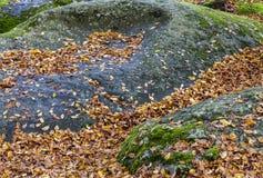 在岩石的叶子 库存照片
