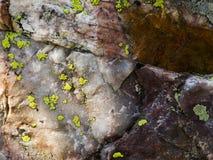 在岩石的地衣在斯诺伊范围山的湖玛里 免版税库存图片