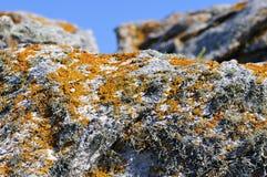 在岩石的地衣在Quiberon在法国 免版税图库摄影