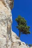 在岩石的孤独的杉木。 库存图片