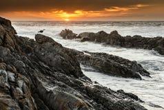 在岩石的孤立海鸥在日落 免版税库存图片