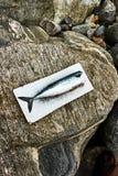 在岩石的新鲜的干净的未加工的鲭鱼 库存照片