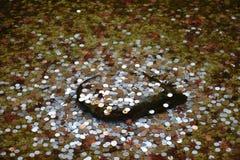 在岩石的日本硬币在水下 库存图片