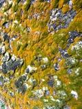 在岩石的有趣的海藻形成 免版税库存图片