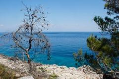 在岩石的杉木在海岛上的海附近在克罗地亚 免版税库存图片