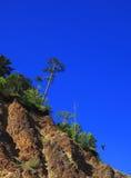在岩石的杉木明亮的蓝天 库存图片
