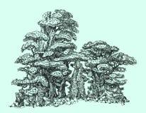 在岩石的杉木盆景 库存图片